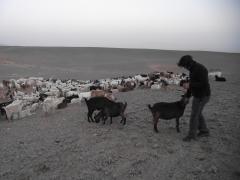 Mongolie août 2010 750.JPG