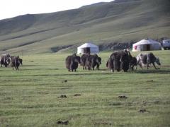 Mongolie août 2010 340.JPG